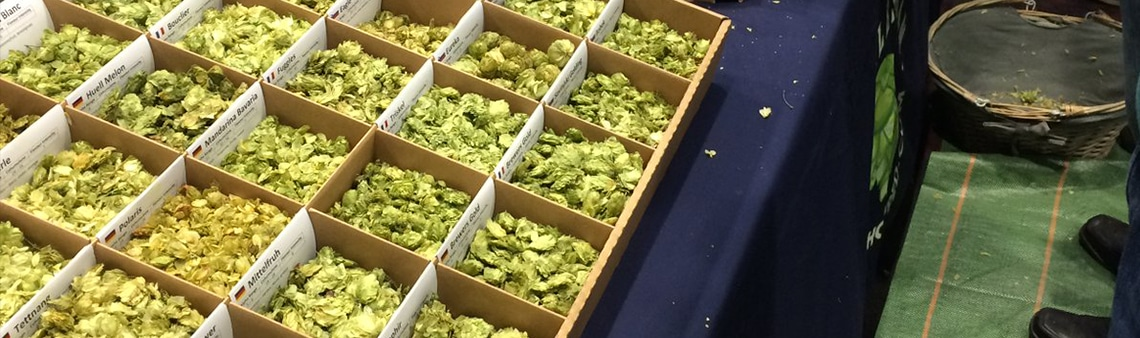 A picture of our hop samples in the hop sample boxes that we use as a display